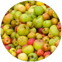pommes-jaunes